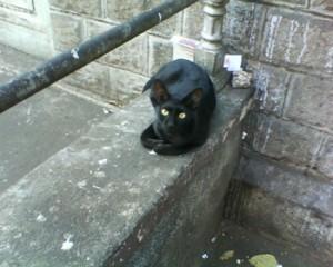 A cat at Colaba